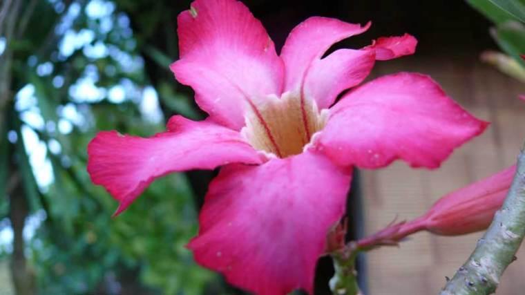 flowerbali