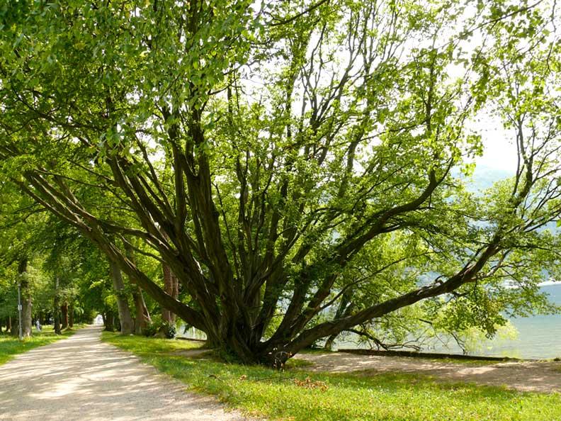 [Bild: baume-trees.jpg?w=792&h=594]